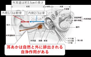 耳の構造と耳あかの自浄作用